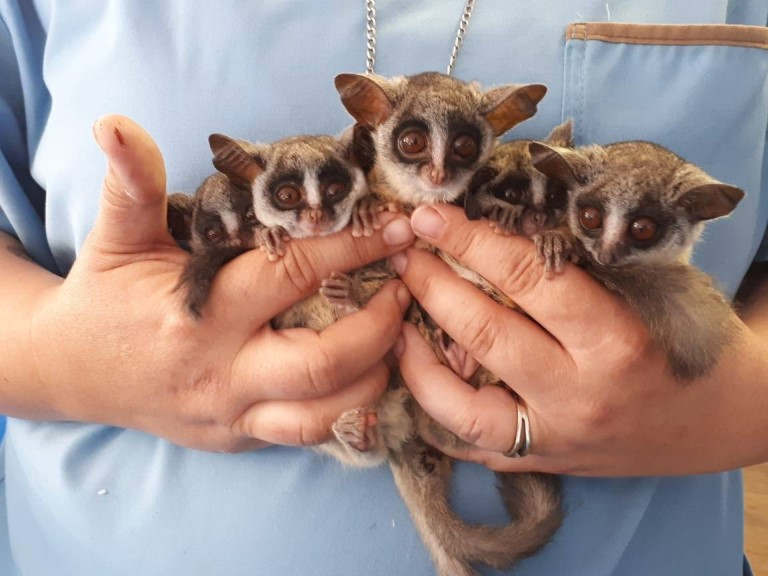 Johannesburg Wildlife Veterinary Hospital Photo 1